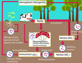 The Nitrogen Cycle vector design