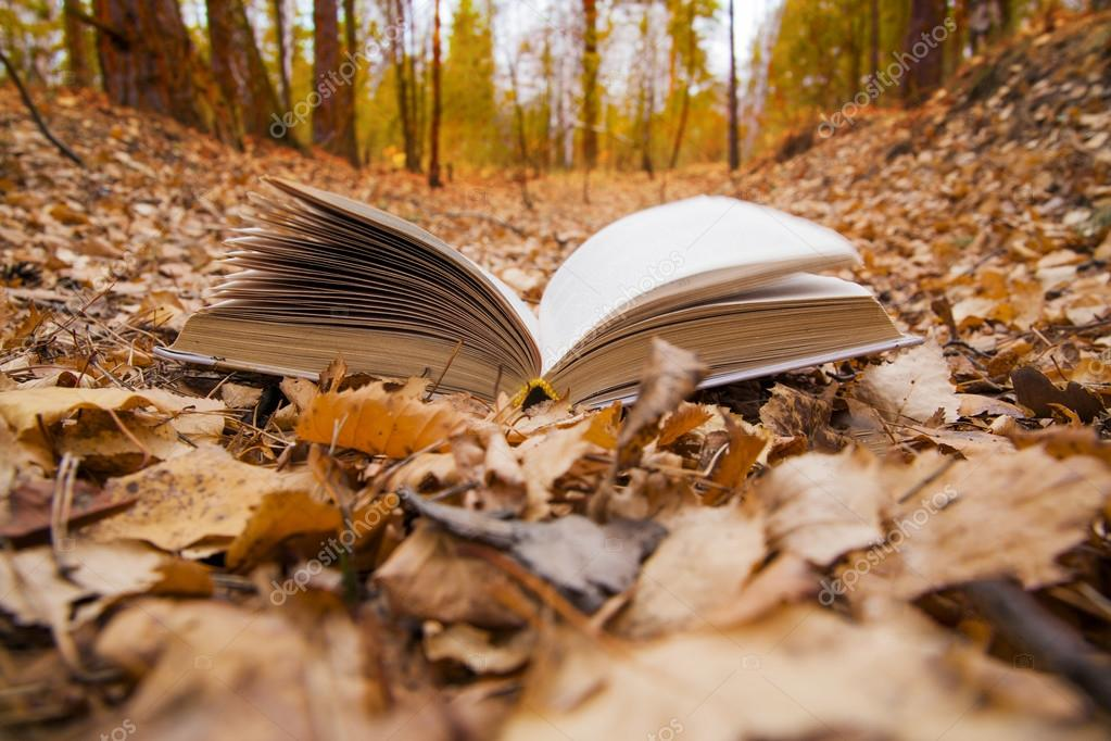 opened book  in autumn park