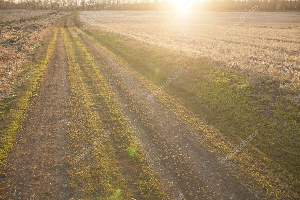 dirt road in field during sunset
