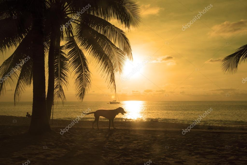 Paradise beach at sunset in Phuket