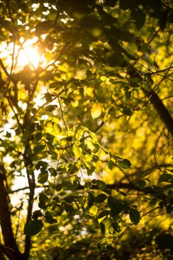 fresh green leaves on tree