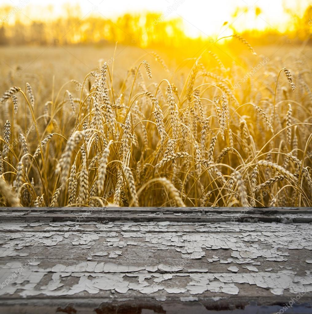 wooden sill and wheat  field