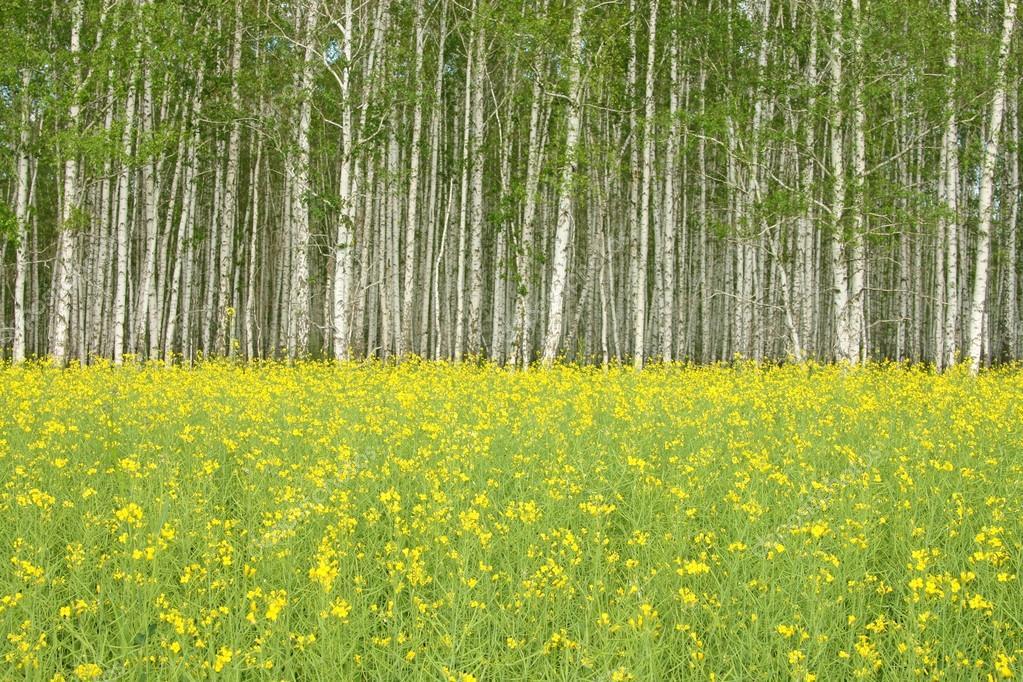 yellow flowers on meadow