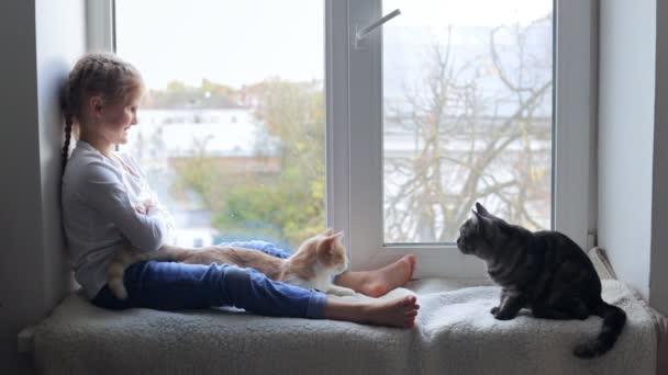 Glückliches Kind im Urlaub spielt mit Katzen am Fenster