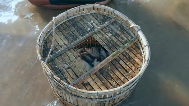 fisher removing enmeshed fish catch and keeping it in a bamboo basket
