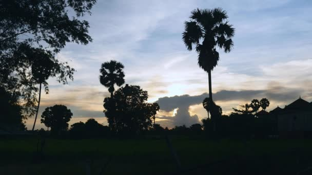 Silhouette of tropical trees at cloudy sunset