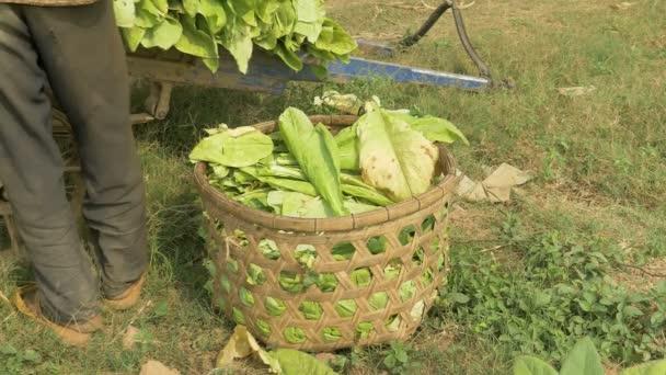 tabákové listy do bambusového koše