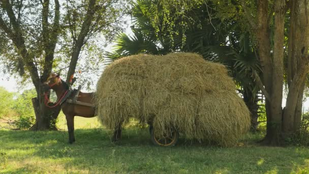 Horse neighing with the cart loaded with hay on a field