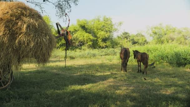 Hříbě koně stojí se svou matkou v oboru