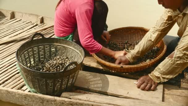 zblízka škeble Rydla třídění říční škeble od skal v bambusovém koši a udržet ji v pánvi
