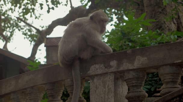 Ospalý opice sedící na kamenné zábradlí
