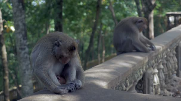 Two monkeys sleeping the head down between the knees while sitting on a stone railing