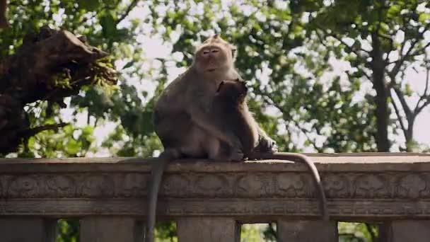 Matka opice, péči o své dítě, zatímco sedí na kamenné zábradlí
