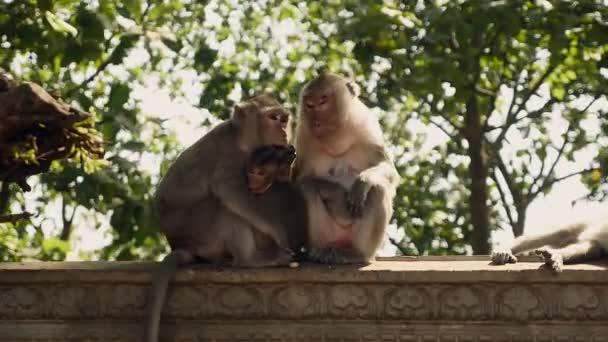 Opičí rodina sedí na kamenné zábradlí