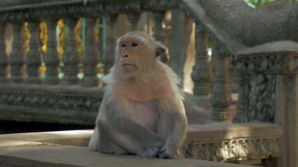 Monkey sitting quietly on a stone railing