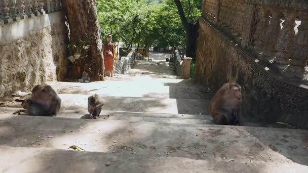 Matka opice sledovat své děti hrát na kamenných schodech