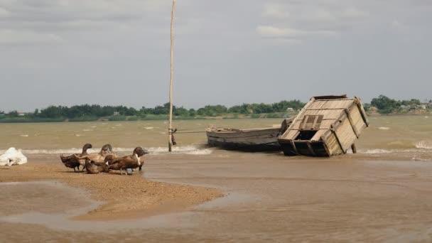 Vor kachny pitné vody v řece na větrný den