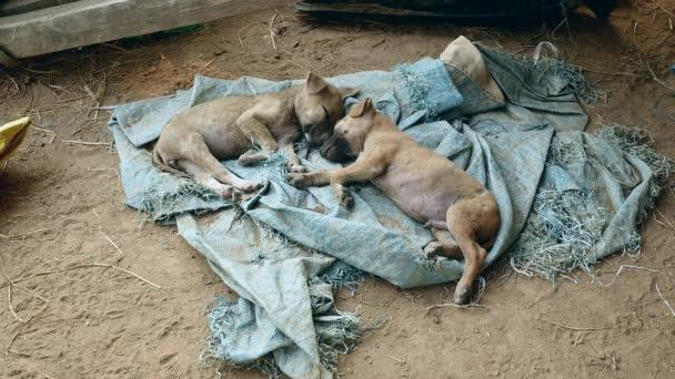Slapen Op Grond : Aantal pups slapen op een grond tarp u stockvideo worldpicture