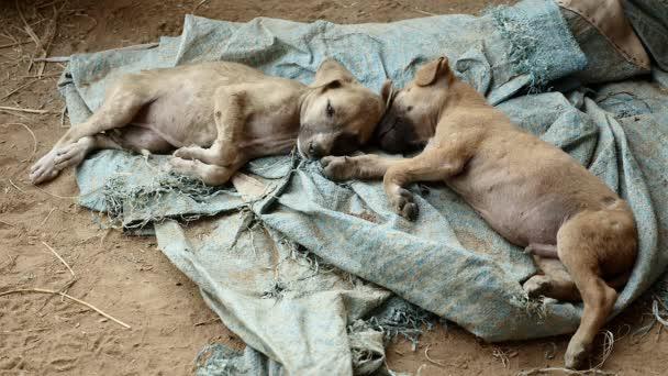 dvě štěňata spí na zemi plachtou
