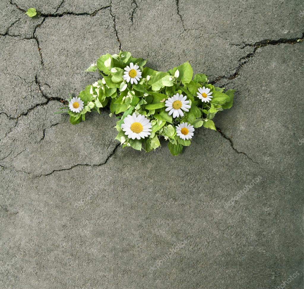 Flowers with green leaves coming out from concrete cracks