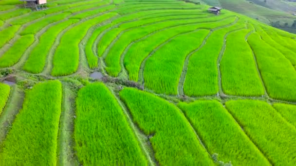 Rice Terraces Aerial Shot at north of Thailand. 4K