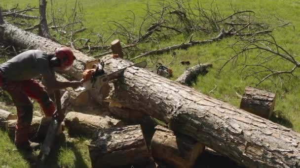 professional chainsaw operator cutting a pine tree slow motion with cut resistant pants and boots with slow motion 24