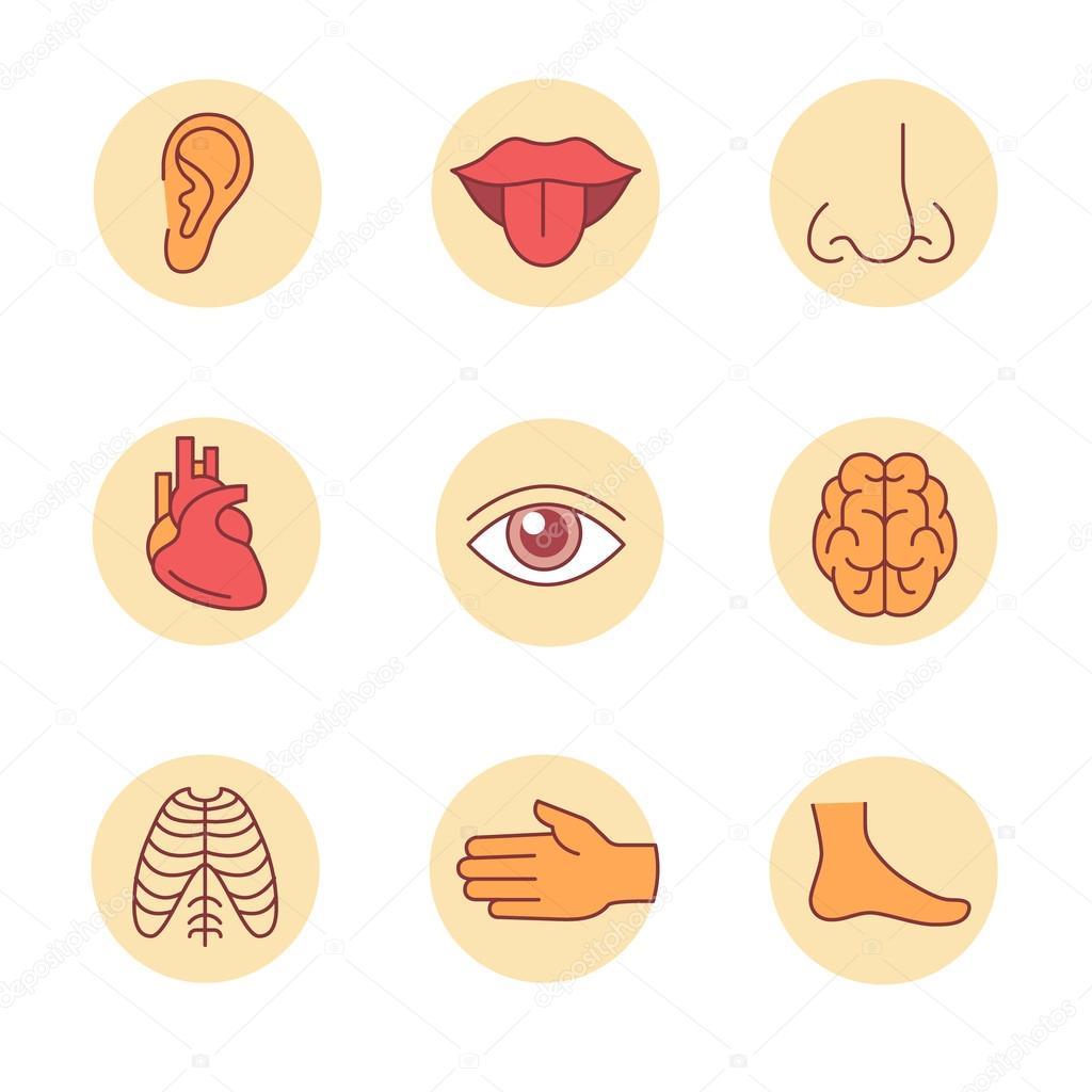 Medizinische Symbole, menschliche Organe und Körperteile ...