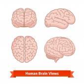 Lidský mozek zobrazení