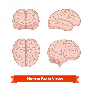 Human brain views