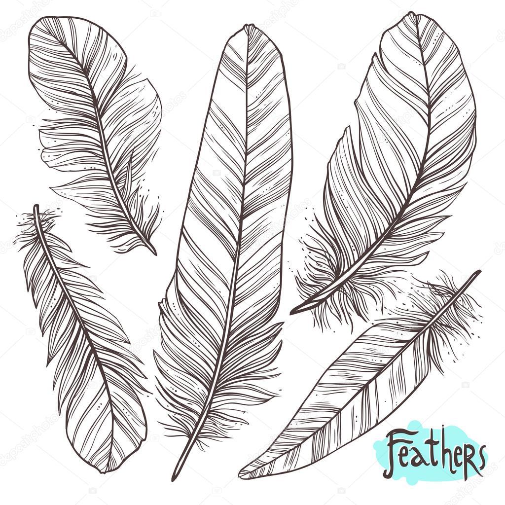 羽の描き下ろしイラストを手します ストックベクター