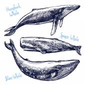 Different Hand Drawn Whales