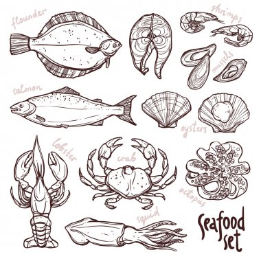 Sketch seafood collection