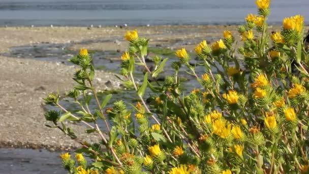 élénk sárga vadvirágok partján