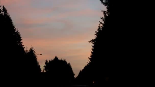 slow motion drive po západu slunce lesní cesta