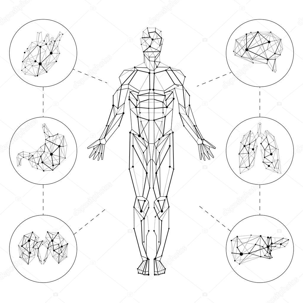Menselijke en interne organen — Stockvector © yosart #82494186