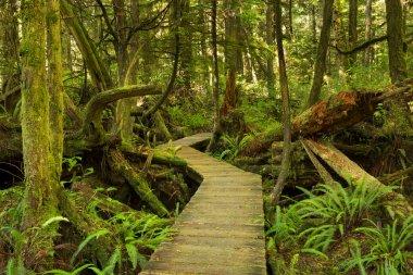 Boardwalk through lush rainforest, Pacific Rim NP, Vancouver Isl