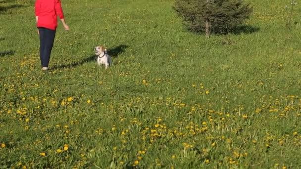 Dívka vlaky svého psa v parku