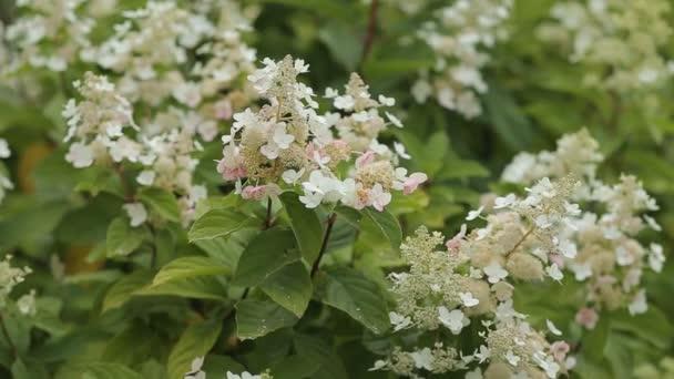 oblast květy sedmikrásky