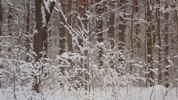 Padající sníh, zimní Les