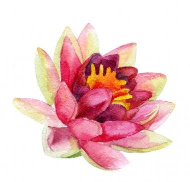 lotus flower. watercolor