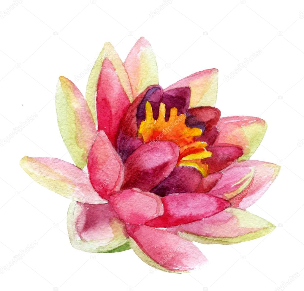 lotus flower. watercolor — Stock Photo © Tetiana_Syrytsyna #88174222