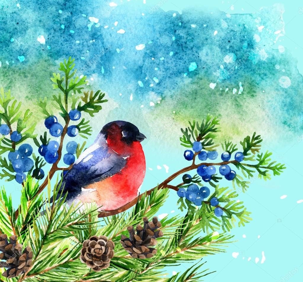 Открытка снегири на ветке ели, открытку мужчине день