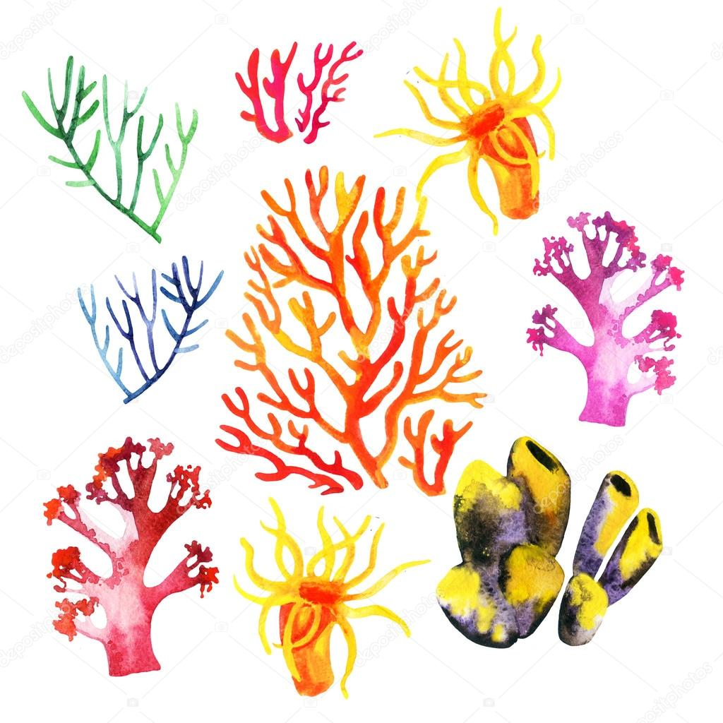 Illustration of the colorful coral reefs