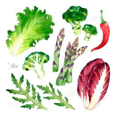 Watercolor vector vegetables set