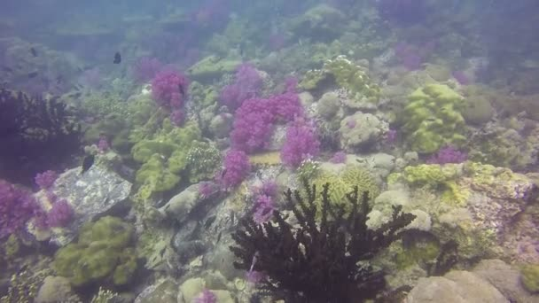 Pod vodou záběr plodný týmové korálový útes krajiny, plné hejna rybek a barevné softcorals, natočený v Rudém moři, Súdán