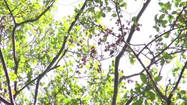 Přírodní pozadí. Krásné sluneční svit přes foukání větru strom zelený listy. Rozmazané abstraktní bokeh s sluneční erupce. Sluneční světlo. Sunflare. Zpomalený pohyb 50 fps. Vysoká rychlost fotoaparátu zastřelil 1080p