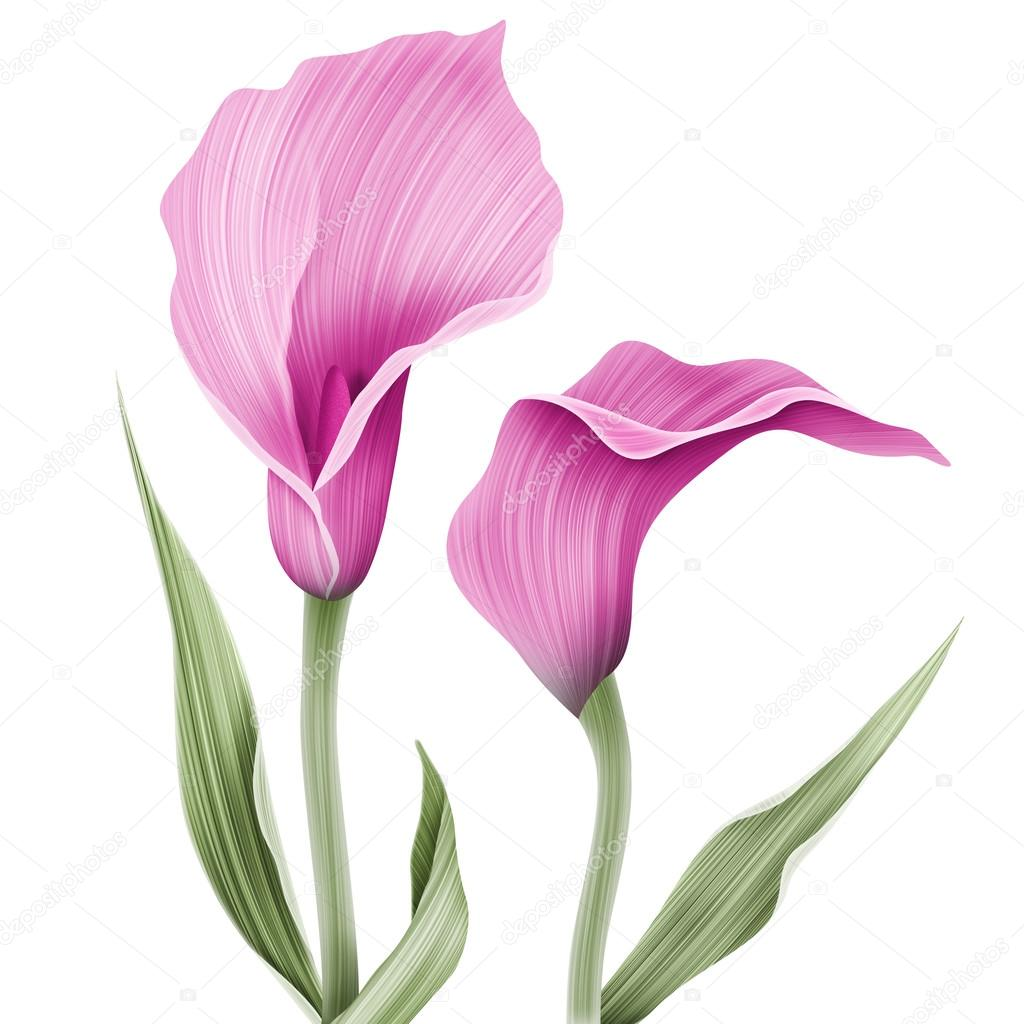 Calla lily flower pattern stock photo themisha 90628446 calla lily flower pattern stock photo izmirmasajfo Image collections