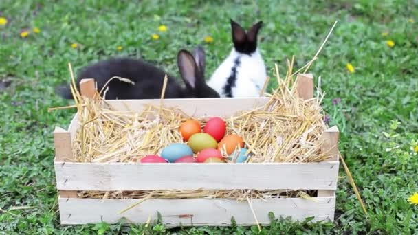 rabbits and Easter eggs