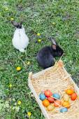 Fotografie rabbits and Easter eggs