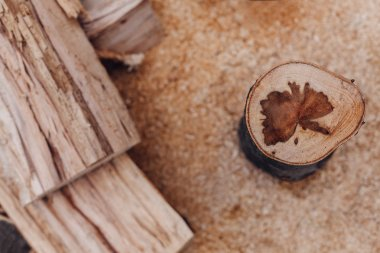 Stump in the sawdust